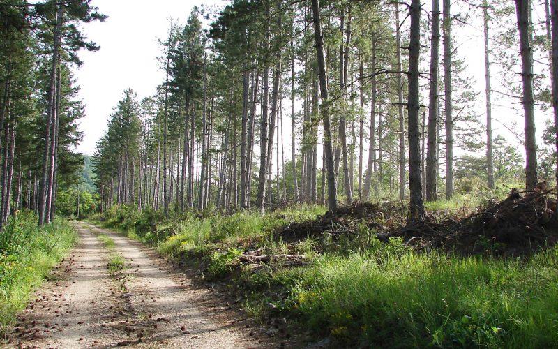 Δάσος Δαδιάς - Θράκη 10