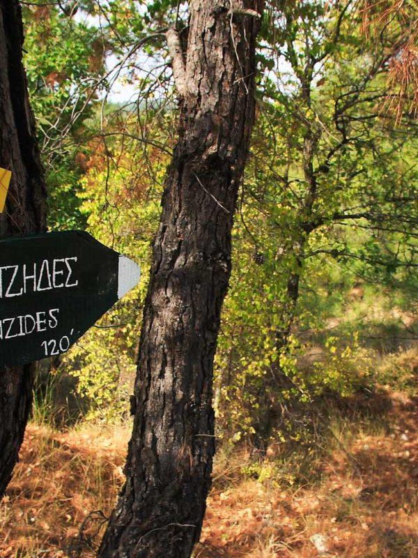 Δάσος Δαδιάς - Θράκη 16