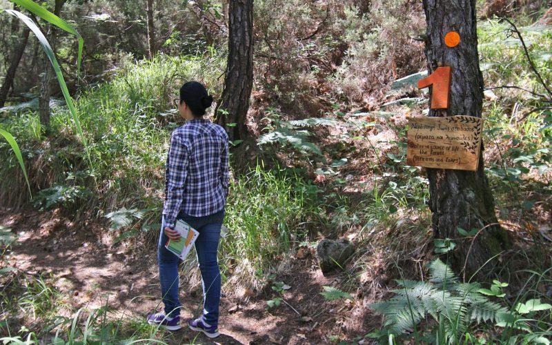 Δάσος Δαδιάς - Θράκη 1