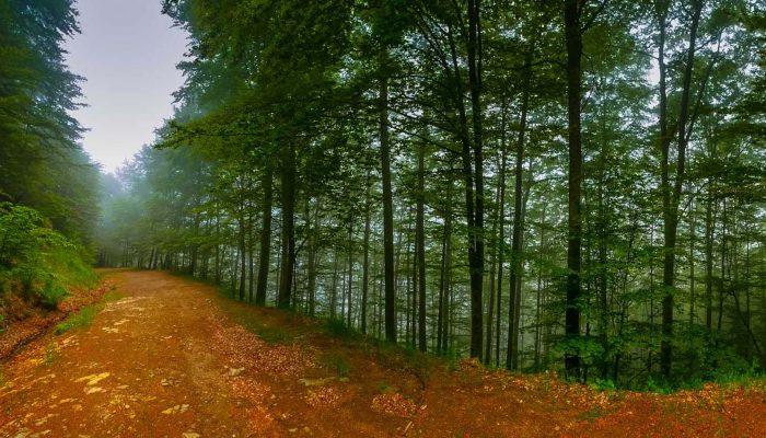 Δάσος Χαϊντούς - Θράκη 2