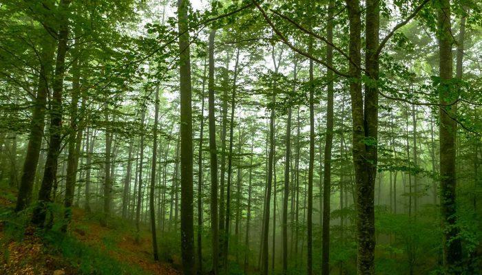 Δάσος Χαϊντούς - Θράκη 3