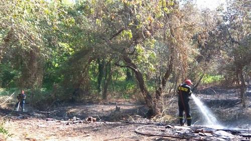 Αλεξανδρούπολη: Υπό έλεγχο η φωτιά στον Πλατανότοπο του Μαΐστρου